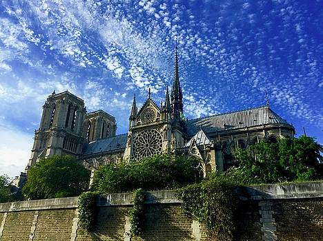 Notre Dame from the Seine by Lexi Heft