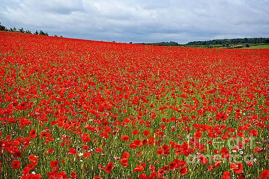 Nottinghamshire Poppy Field by David Birchall