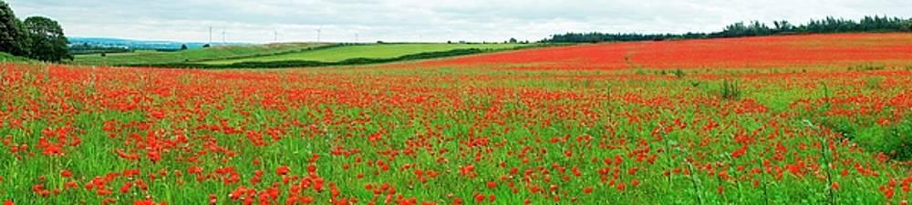Nottinghamshire Poppy Field Panorama by David Birchall