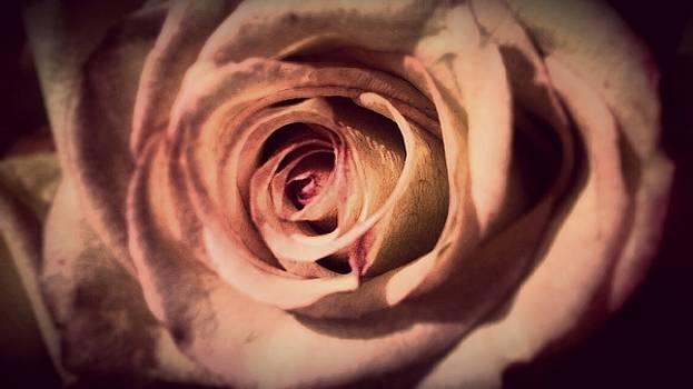 Novela Rosa by Kevin D Davis