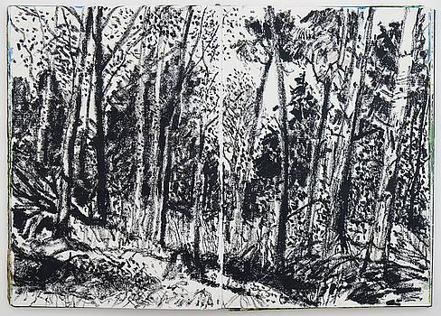 November Forest by Martin Stankewitz