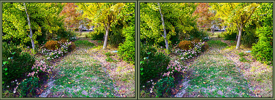 November Garden Path - 3D Stereo X-View by Brian Wallace