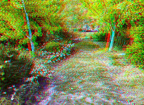 November Garden Path - Use Red-Cyan 3D Glasses by Brian Wallace