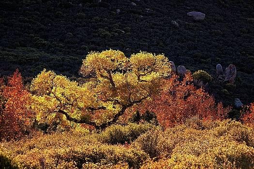 November in Arizona by Ron Chilston
