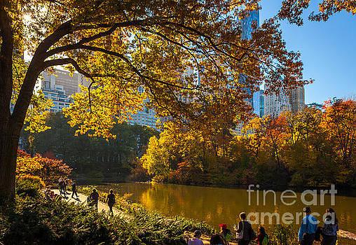 November in Central Park by Studio Laurent