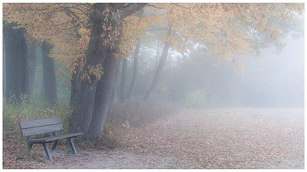 November Mood by Gina Broma