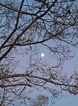 November Moon by Michele Myers