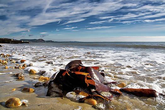 November Seascape - Lyme Regis by Susie Peek