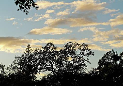 November Sky by Michele Myers