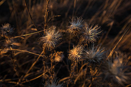 November Warmth Explored by Benjamin Sullivan