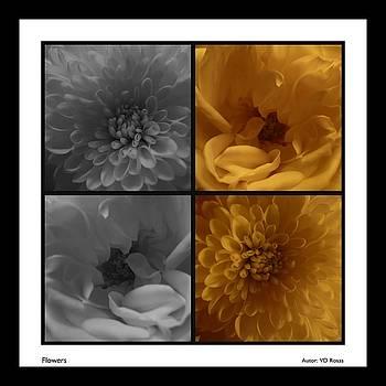 Nu-Flowers by Victor Daniel  Rosas Flores