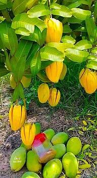 Nusa Mango by Lorna Maza