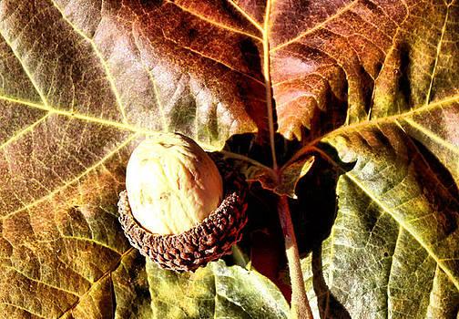Karen Scovill - Nut on a Leaf