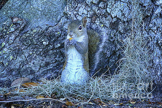 Nuts Anyone by Deborah Benoit