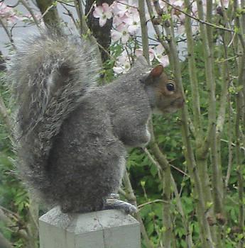 Nuts by Kathy Bradley