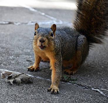 Nuts Please... by Kurt Bonnell