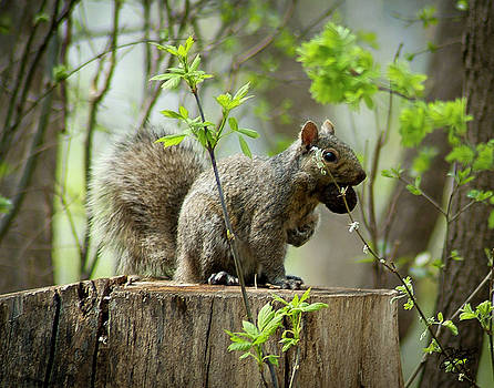 Nutty by Darlene Smithers