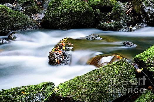 Charmian Vistaunet - Nuuanu Stream III