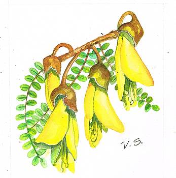 NZ native kowhai by Val Stokes
