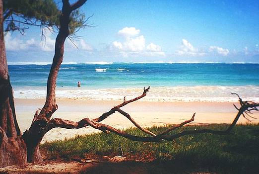 Diane Merkle - Oahu North Shore