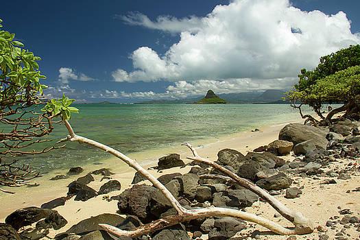 Oahu's East Coast 3 by Debby Richards