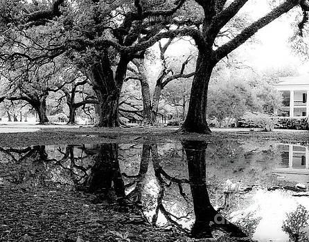 Oak Alley Reflection by Trish Casey-Green