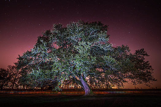 Oak Alley Signature Tree under the stars by Andy Crawford