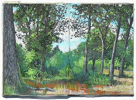 Martin Stankewitz - oak and beech forest in July , plein air oil pastel study