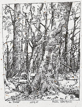 Martin Stankewitz - oak and beech trees in the woods ink drawing