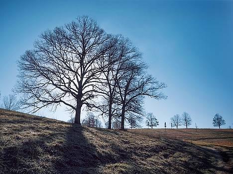 Oak and Clear Sky by Brian Shepard