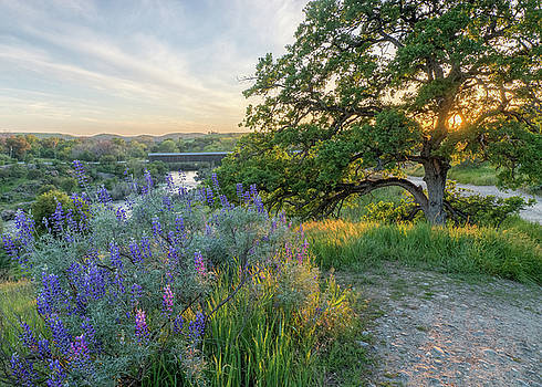Oak and Lupine Evening by Eric Bjerke Sr
