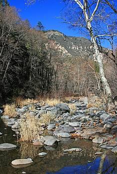 Oak Creek 2 by Gary Kaylor