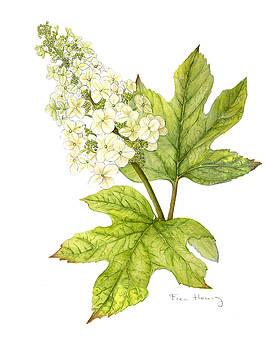 Oak Leaf Hydrangea by Fran Henig