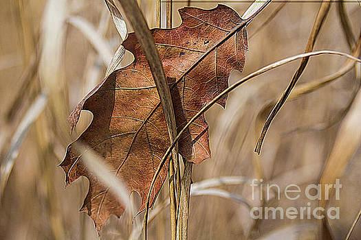 Oak leaf in grass by Jim Wright
