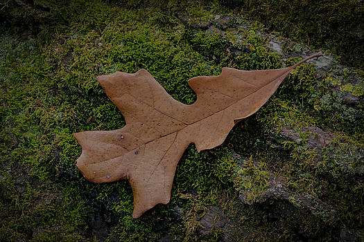Oak Leaf Moss by Ray Congrove