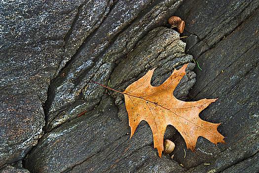 Oak Leaf on the Rocks Photo by Peter J Sucy