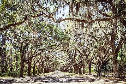 Oak Lined Road by Joan McCool