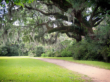 Oak Over the Trail by Michael Colgate
