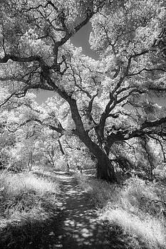 Oak Shaded Trail by Alexander Kunz