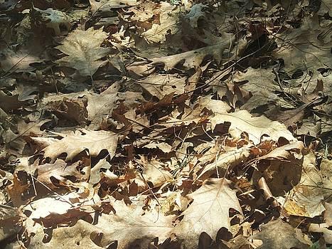 Oak Shadows by Loretta Pokorny