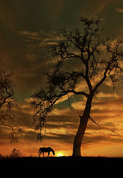 Oak Tree and Horse Sunrise by Stephanie Laird