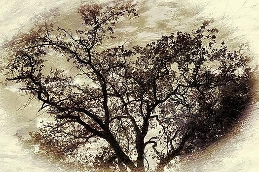 Oak tree by Athala Carole Bruckner