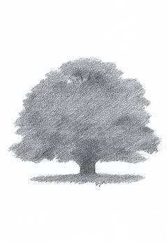 Oak Tree Drawing Number Three by Alan Daysh