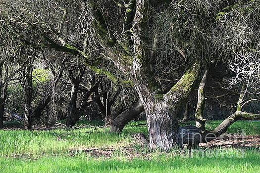 Oak Tree by Katherine Erickson