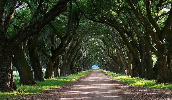 Oak Tree Path by Jeanne  Woods