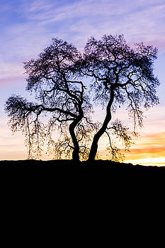 Priya Ghose - Oak Tree Silhouette At Dawn