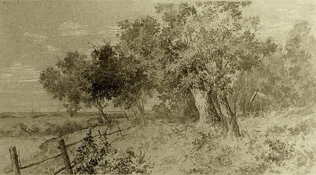 Oak-trees by Anna Ankudinova