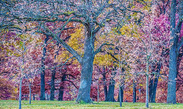 Judith Barath - Oak Trees at Fall