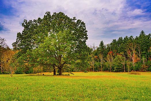 Oak Trees In Clearing by Steven Ainsworth