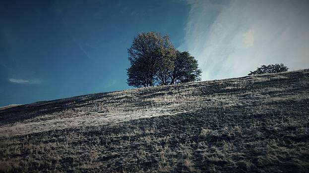 Bonnie Bruno - Oak Upon a Hill